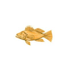 Black Sea Bass Drawing vector image