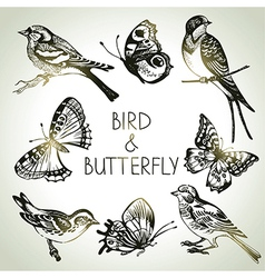 Hand drawn bird and butterfly set vector image vector image
