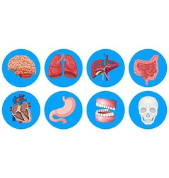 Human organs on round badge vector image vector image