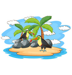 scene with two toucan birds on island vector image
