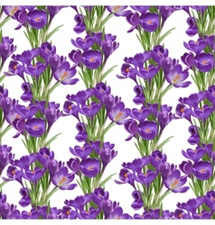 Seamless pattern from spring purple crocuses vector image