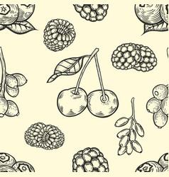 engraving style berries vector image