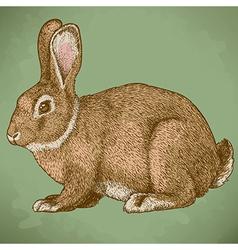 engraving rabbit retro vector image