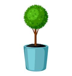Boxwood topiary garden plant decorative tree in vector