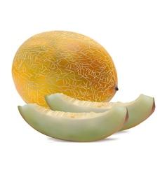 Rock Melon vector image vector image