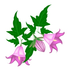 Branch of Campanula Rotundifolia Flower on White vector image