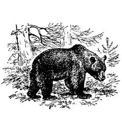 Brown bear vector