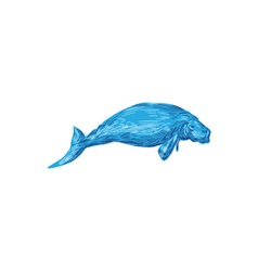 Dugong Drawing vector