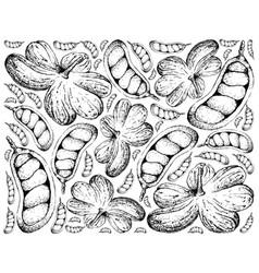 Hand drawn background of cola millenii fruits vector