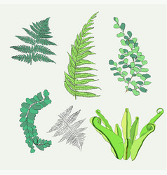 Hand drawn botanical collection fern leaves vector