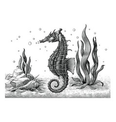 Sea horse hand drawing vintage engraving vector