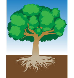 Tree with roots and dense foliage vector