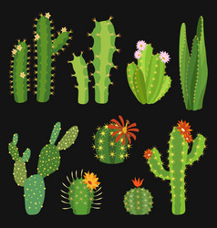 cactuses cactus flower collection exotic summer vector image