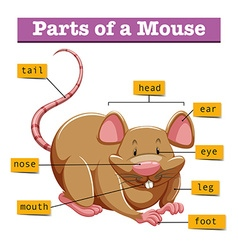 Diagram showing parts of mouse vector image