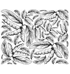 Hand drawn background of dasymaschalon lomentaceum vector