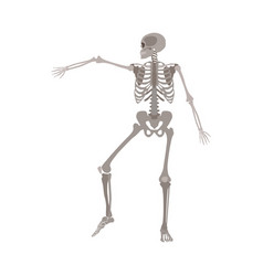 Human skeleton dancing medical body anatomy model vector