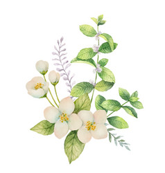 Watercolor bouquet of jasmine and mint vector