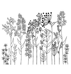 hand drawn of design wildflowers floral vector image