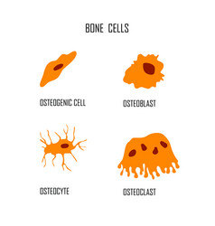 Bone cells osteon flat style vector