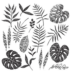Hand drawn tropical leaves set vector