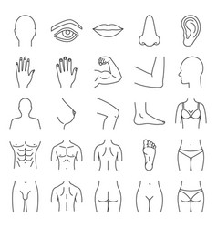 human body parts linear icons set vector image