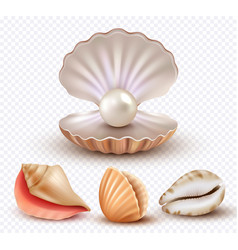 Realistic seashells mollusk shells ocean beach vector