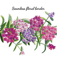 seamless border with phlox flowers isolated on vector image