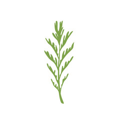 Dill salad rosemary leaf vegetarian healthy food vector