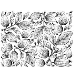 Hand drawn background of gardenia erubescens fruit vector