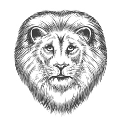 Hand Drawn Lion Head vector
