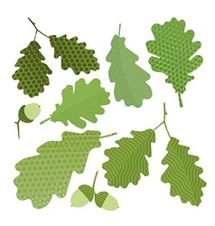 Isolated green leaf of oak vector image