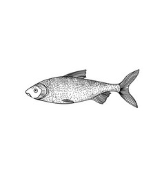 river fish sign isolated retro engraved seafood vector image
