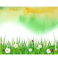 watercolor summer background with green grass vector image
