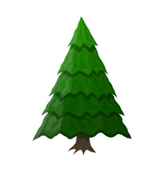 christmas tree spruce evergreen tree vector image