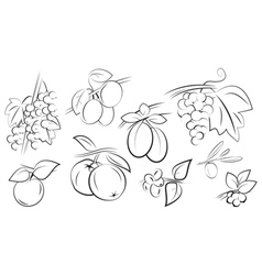 fruits berries set vector image