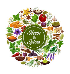 herbs and species icon with seasoning for cooking vector image