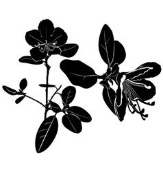 ledum vector image