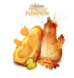 Pumpkin watercolor isolated fall season vector