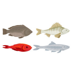 Realistic marketable fish set various vector
