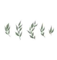 Set bay leaf green leaves on white vector