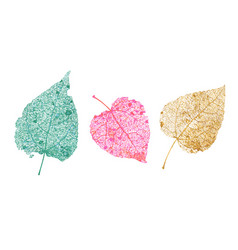 set skeletons leaves fallen foliage for autumn vector image