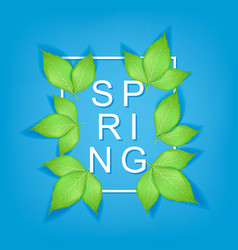 spring text with realistic green leaves and frame vector image