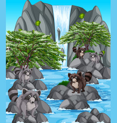 Waterfall scene with many raccoons vector