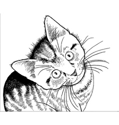 Realistic drawing of a kitten vector image