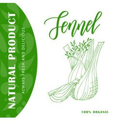 vegetable food banner fennel sketch organic food vector image
