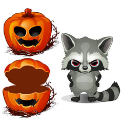 evil raccoon and halloween scary pumpkin face vector image