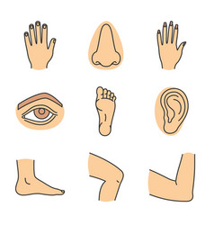 Human body parts color icons set vector