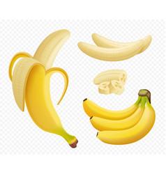 banana realistic healthy natural exotic fruits vector image