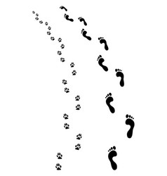 Feet and dog paws vector