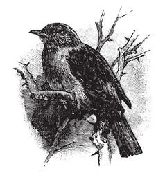 Hedge sparrow vintage vector